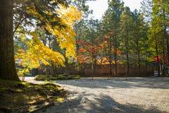 Φθινοπωρινό τοπίο του εθνικού πάρκου Nikko Στοκ Εικόνα