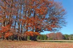 φθινοπωρινό τοπίο Στοκ εικόνες με δικαίωμα ελεύθερης χρήσης