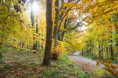 φθινοπωρινό τοπίο Στοκ φωτογραφίες με δικαίωμα ελεύθερης χρήσης