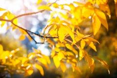 Φθινοπωρινό υπόβαθρο του πάρκου στοκ εικόνες με δικαίωμα ελεύθερης χρήσης