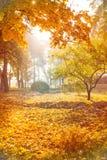 Φθινοπωρινό υπόβαθρο του πάρκου στοκ εικόνες