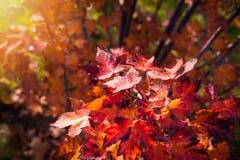Φθινοπωρινό υπόβαθρο του πάρκου στοκ φωτογραφίες