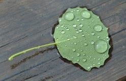 φθινοπωρινό φύλλο Στοκ εικόνα με δικαίωμα ελεύθερης χρήσης