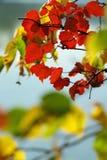 φθινοπωρινό colora ανασκόπησης Στοκ φωτογραφίες με δικαίωμα ελεύθερης χρήσης