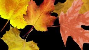 Φθινοπώρου, άνευ ραφής βρόχος διανυσματική απεικόνιση