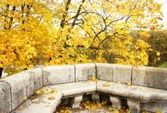 φθινοπώρου αρχιτεκτονικής λεπτομέρειας υπαίθριες πέτρες πάγκων σφενδάμνου δέντρων φύλλων κήπων κίτρινες Στοκ Φωτογραφία