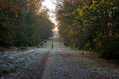 Φθινοπώρου μέσω του δάσους Στοκ φωτογραφία με δικαίωμα ελεύθερης χρήσης