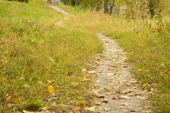 φθινοπώρου μαλακό ίχνος ουρανού φωτισμού φτερών οξιών νεφελώδες πολύ Στοκ Φωτογραφία