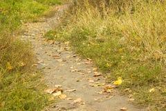 φθινοπώρου μαλακό ίχνος ουρανού φωτισμού φτερών οξιών νεφελώδες πολύ Στοκ εικόνα με δικαίωμα ελεύθερης χρήσης