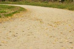 φθινοπώρου μαλακό ίχνος ουρανού φωτισμού φτερών οξιών νεφελώδες πολύ στοκ φωτογραφία με δικαίωμα ελεύθερης χρήσης