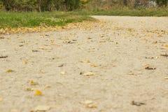 φθινοπώρου μαλακό ίχνος ουρανού φωτισμού φτερών οξιών νεφελώδες πολύ Στοκ εικόνες με δικαίωμα ελεύθερης χρήσης