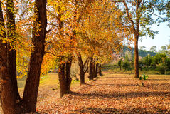 φθινοπώρου μπλε πορτοκάλι σφενδάμνου χρωμάτων πράσινο κίτρινο Στοκ φωτογραφία με δικαίωμα ελεύθερης χρήσης