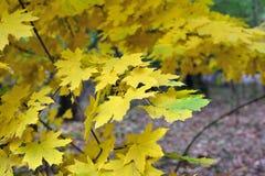 φθινοπώρου μπλε πορτοκάλι σφενδάμνου χρωμάτων πράσινο κίτρινο Στοκ εικόνες με δικαίωμα ελεύθερης χρήσης
