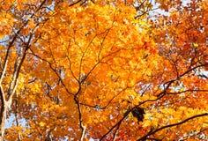 φθινοπώρου μπλε πορτοκάλι σφενδάμνου χρωμάτων πράσινο κίτρινο στοκ φωτογραφίες