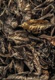 φθινοπώρου χρυσά φύλλα πλαισίων ανασκόπησης μαύρα παλαιό παράθυρο σύστασης λεπτομέρειας ανασκόπησης ξύλινο στοκ εικόνες