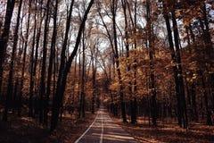 Φθινόπωρο Ð'andscape στο χρυσό δάσος Στοκ φωτογραφίες με δικαίωμα ελεύθερης χρήσης