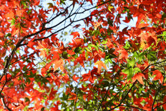 Φθινόπωρο δέντρων και φωτεινά χρώματα Στοκ εικόνα με δικαίωμα ελεύθερης χρήσης