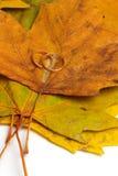Φθινόπωρο αγάπης Στοκ εικόνες με δικαίωμα ελεύθερης χρήσης