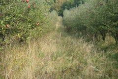 Φθινόπωρο αλεών δέντρων της Apple Στοκ Φωτογραφίες