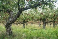 Φθινόπωρο αλεών δέντρων της Apple Στοκ Εικόνες