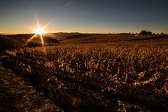 Φθινόπωρο αμπελώνων Chianti ` s, ηλιοφάνεια στοκ φωτογραφίες με δικαίωμα ελεύθερης χρήσης