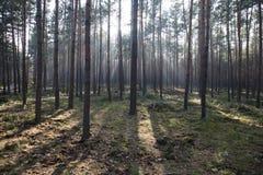φθινόπωρο βαθιά το πιό forresτο Στοκ φωτογραφίες με δικαίωμα ελεύθερης χρήσης