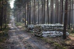 φθινόπωρο βαθιά το πιό forresτο Στοκ φωτογραφία με δικαίωμα ελεύθερης χρήσης