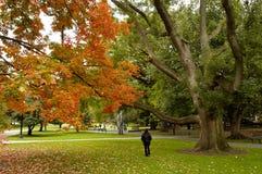 φθινόπωρο Βοστώνη κοινή Στοκ εικόνα με δικαίωμα ελεύθερης χρήσης
