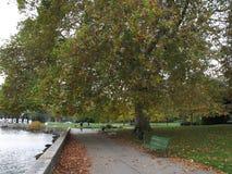 Φθινόπωρο Γενεύη Στοκ Εικόνες