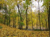 Φθινόπωρο δασικό Gomel Στοκ εικόνα με δικαίωμα ελεύθερης χρήσης