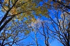 φθινόπωρο δασικό Wisconsin Στοκ Εικόνες
