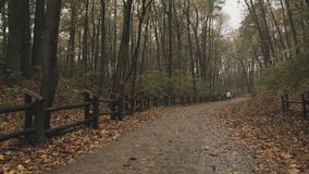 Φθινόπωρο δασών/πάρκων μετά από τη βροχή και τους unrecognizable ανθρώπους που περπατούν στο υπόβαθρο Στατικός πυροβολισμός φιλμ μικρού μήκους
