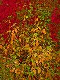 Φθινόπωρο ζωγραφικής ελεύθερη απεικόνιση δικαιώματος