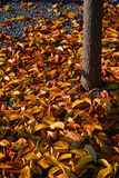 Φθινόπωρο, ζωηρόχρωμο τα μειωμένα φύλλα Στοκ φωτογραφία με δικαίωμα ελεύθερης χρήσης