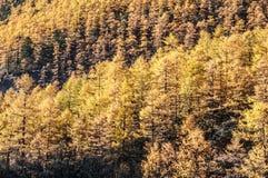 φθινόπωρο ζωηρόχρωμο Στοκ εικόνα με δικαίωμα ελεύθερης χρήσης
