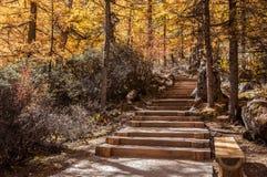 φθινόπωρο ζωηρόχρωμο Στοκ Φωτογραφίες