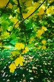 φθινόπωρο ζωηρόχρωμο Στοκ Φωτογραφία