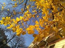 φθινόπωρο ζωηρόχρωμο Στοκ φωτογραφίες με δικαίωμα ελεύθερης χρήσης