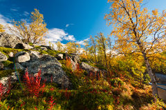 φθινόπωρο ζωηρόχρωμο Στοκ Εικόνες