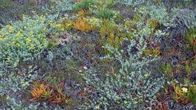 φθινόπωρο ζωηρόχρωμο Στοκ Εικόνα