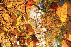 φθινόπωρο ζωηρόχρωμο Στοκ εικόνες με δικαίωμα ελεύθερης χρήσης