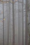 Φθινόπωρο Ιταλία πάρκων Casentino Στοκ εικόνες με δικαίωμα ελεύθερης χρήσης