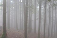 Φθινόπωρο Ιταλία πάρκων Casentino Στοκ Εικόνες