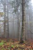 Φθινόπωρο Ιταλία πάρκων Casentino Στοκ φωτογραφία με δικαίωμα ελεύθερης χρήσης