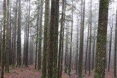 Φθινόπωρο Ιταλία πάρκων Casentino Στοκ φωτογραφίες με δικαίωμα ελεύθερης χρήσης