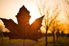 Φθινόπωρο, κίτρινοι φύλλο και ήλιος στοκ φωτογραφία με δικαίωμα ελεύθερης χρήσης