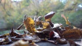 Φθινόπωρο, καταρράκτες και ρεύματα, φύλλωμα φιλμ μικρού μήκους