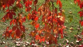 Φθινόπωρο, καταρράκτες και ρεύματα απόθεμα βίντεο