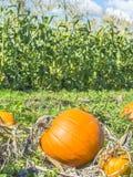 Φθινόπωρο: Κολοκύθες και καλαμπόκι Στοκ εικόνα με δικαίωμα ελεύθερης χρήσης