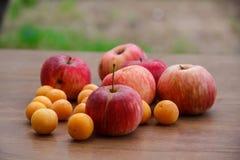 Φθινόπωρο Κόκκινη πτώση μήλων στο έδαφος Στοκ Φωτογραφίες